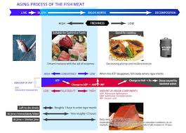Meat Quality Chart Visual Fish Meat After Death Chart For Quality Of The