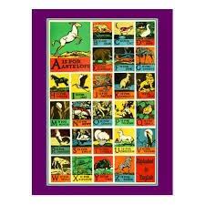 Animal Abc Chart Animal Abc Alphabet Chart Teachers And Learners Postcard