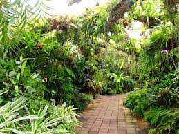 Small Picture 323 best Tropical Garden And Architecture Design images on
