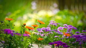 HD Flower Garden Wallpaper 1920×1080 ...