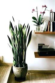 best tall indoor house plants lovely no sunlight needed images on large houseplants for low light