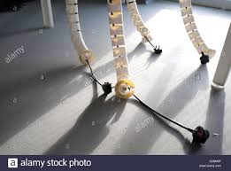 office cable management. Shared Office Cable Management System With Four Unplugged Plugs Lying On Floor Morning Sun Casting Long Shadows.