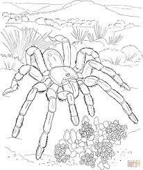 Small Picture Wth Coloring Page Of Desert Animals Coloring Coloring Pages