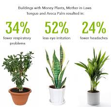 Best Plants To Clean The Air | Homie | Pinterest | Plants, Indoor Plants  And Best Indoor Plants