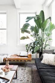 Decorating A Large Living Room Extraordinary Large Indoor Trees That Make A Bold Statement In 48 Plant Life