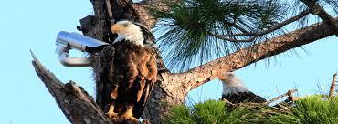 pritchett eagle cam. Exellent Eagle With Pritchett Eagle Cam E