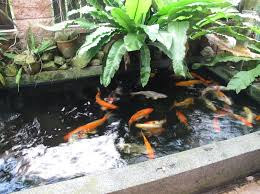 Small Picture We are building some form of raised pond like this in the summer