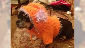 <b>Одежда для кошек и</b> собак ручной работы - купить, продать или ...