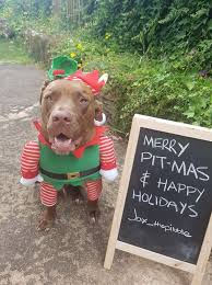 merry pit mas to my dc rescues family love from jax and his humans