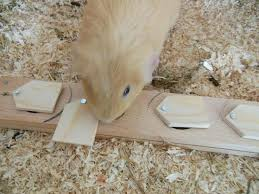 diy guinea pig toys tutorial brain teaser food board wooden toy for small pets easy