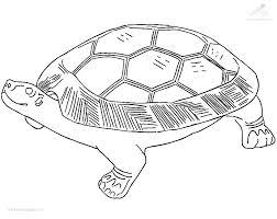 Kleurplaat Dieren Schildpad Kleurplaat Schildpad