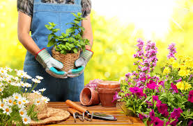 starting your garden from scratch the