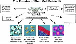 how you should write an introduction for should embryonic stem advocates of embryonic stem cell research claim new human lives will not be created for the sole purpose of experimentation