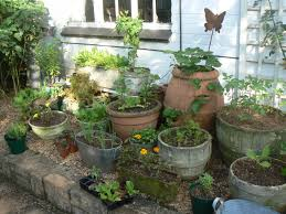 Unwins Kitchen Garden Herb Kit Kitchen Garden Plants Can Run The Gamut From Corn To Tomatoes To