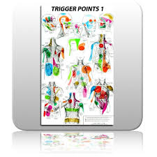 Free Trigger Point Chart Free Printable Reflexology Charts Trigger Point Chart