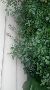 Little Black Ants In Kitchen House Ants Control Exterminators 425 440 0966 Professional
