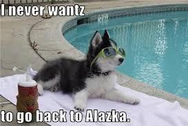 Husky memes | Baha memes!! | Pinterest | Husky Meme, Husky and Meme via Relatably.com