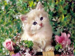 Cute Cat Wallpapers Kitten 1024x768 ...