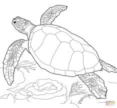 Small Picture Alligator Snapping Turtle Coloring Page In Coloring Pages Draw A