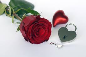 romance love rose romantic flower