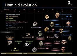 Human Evolution Timeline Chart Timeline Of Hominid Evolution Visual Ly