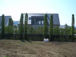 Spalierb Ume Die Schwebende Hecke Moderner Sichtschutz Im Garten