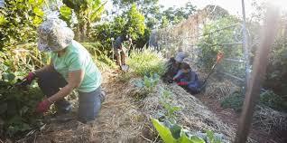 february 1 kiama community gardens grants information sessions available