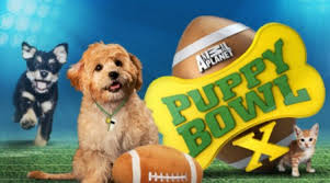 puppy bowl x halftime show. Beautiful Puppy Yes The Puppy Bowl Is By And Large An Event All About Puppies But At  Same Time We Are Here To Discuss Something Else That Has Become A Massive Part  To X Halftime Show