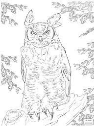 Small Picture coloring pages for kids owls Cartoon Owl birds colorpages7com