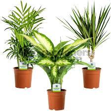 Office pot plants Office Space Indoor Plant Mix Plants House Office Live Potted Pot Plant Tree Ebay Indoor Plant Mix Plants House Office Live Potted Pot Plant