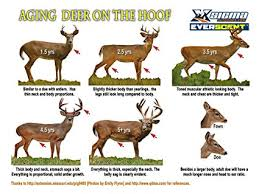 Sigma Outdoors Everscent Aging Deer On The Hoof Poster