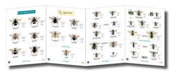 Bee Identification Chart Uk Bees Identification Chart