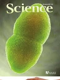 Sciencemag 28 1 2011 Epigenetics Dna Methylation