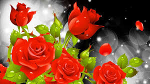 red rose background wallpaper