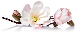 Free Pretty Spring Flower In Bloom Ebay Template Free