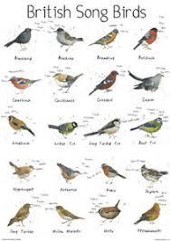 British Garden Birds Chart Details About A4 British Song Bird Garden Chart Poster Print Wildlife Nature