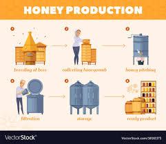 Flow Chart Cartoon Honey Production Process Cartoon Flowchart