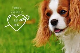 15 great cavalier king charles gift ideas perfect present ideas for cavalier dog owners