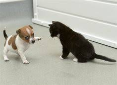 cute puppy and kitten best friends. Kitty And Buttons Adorable Best Friends To Cute Puppy Kitten