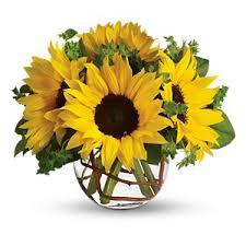 sunny sunflowers in valdosta ga nature s splendor
