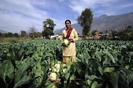 an essay on farming in the organic center organic farming in healthier happier