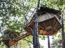 Tree House Plans Two Trees 6 Lofty Treehouse Vacation Homes You Can