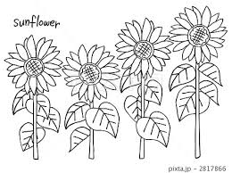 Sunflowerラフのイラスト素材 2817866 Pixta