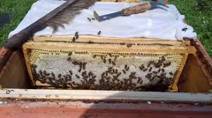 Медосбор-Качка/ <b>Один день из жизни</b> пчеловода - YouTube