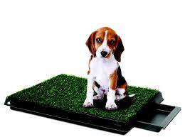 dogs bathroom grass. petzoom pet park deluxe indoor bathroom system on sale today w/ free shipping @ www dogs grass