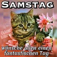 Spruch Samstag Lustig Bilder Und Sprüche Für Whatsapp Und Facebook