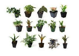 house plants. Tropical House Plants