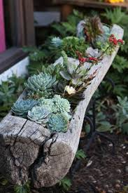 Small Picture Succulent Garden Ideas Ideas About Succulents Garden On