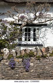 cote window with wisteria and flowers on stone wall