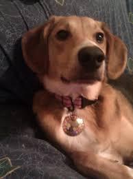 Ava Riley Rohrbaugh aka Beaglelow - Home | Facebook